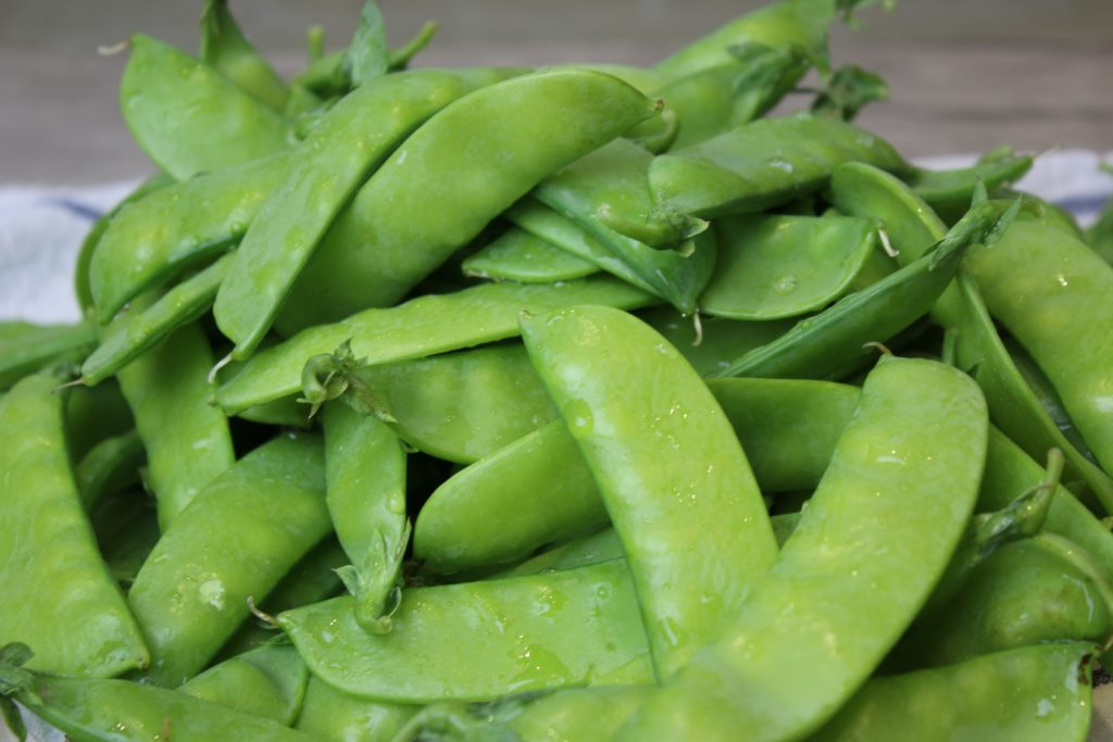 Freshly harvested garden snow peas