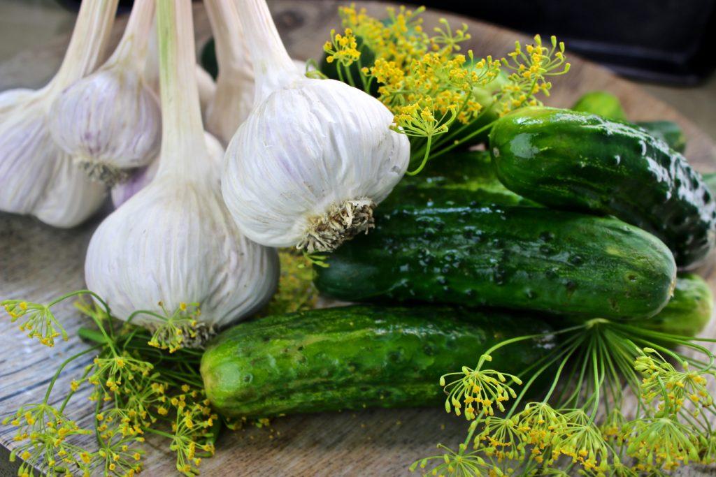 garlic, dillweed, cucumbers