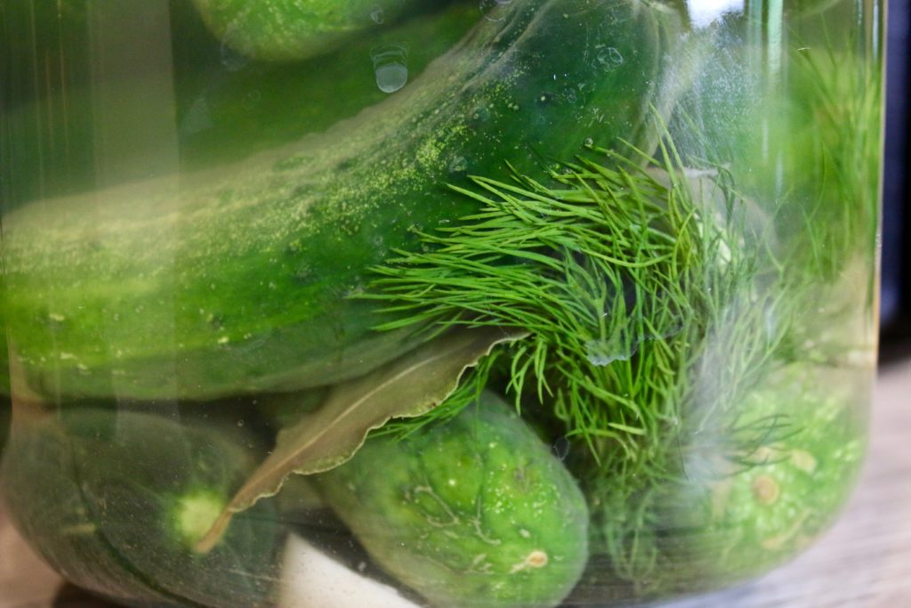 cucumbers, dill, garlic and bay leaf